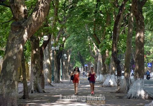 'Điều hòa xanh' trên đường phố giúp làm dịu nóng