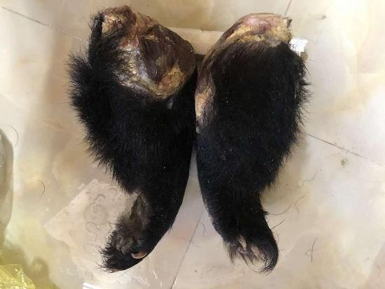Phạt 700 triệu đồng đối tượng buôn bán trái phép 2 chi gấu