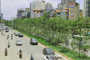 Cây xanh góp phần làm dịu cái nắng mùa hè