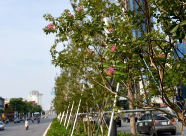 Hà Nội: Rực rỡ sắc hoa trên nhiều tuyến phố