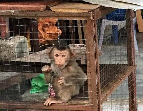Cứu hộ 46 cá thể động vật hoang dã trong tháng 6