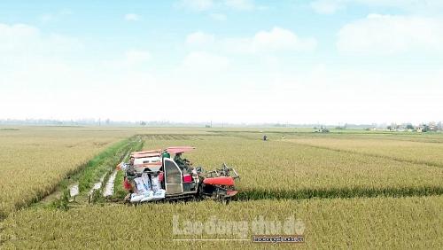 Ngành Nông nghiệp Hà Nội duy trì tốc độ tăng trưởng ổn định