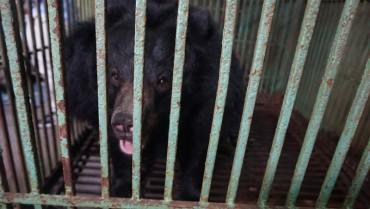 Thái Nguyên: Người dân tự nguyện chuyển giao hai cá thể gấu đang bị nuôi nhốt