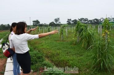 Tận dụng lợi thế để phát triển du lịch nông nghiệp