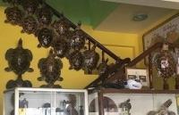 Hơn 18 năm tù cho 2 đối tượng buôn bán 14 tiêu bản rùa biển