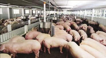 Điều tra, khảo sát tình hình sử dụng kháng sinh và hiện trạng môi trường tại các cơ sở chăn nuôi