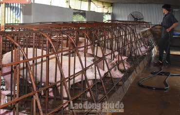 Tăng cường các biện pháp kỹ thuật về an toàn sinh học trong chăn nuôi lợn