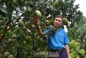 Nhiều lĩnh vực sản xuất nông nghiệp đều đạt và vượt chỉ tiêu