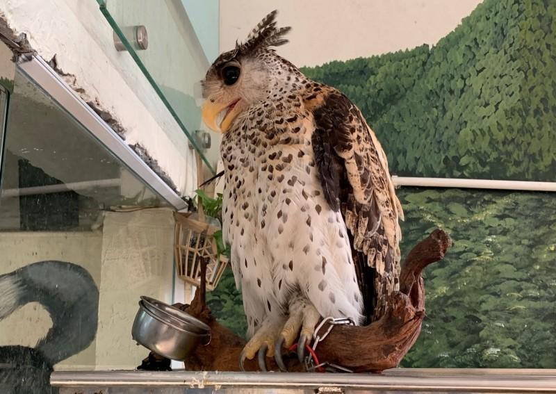 Gần 40 cá thể động vật hoang dã được giải cứu trong tháng 8