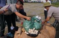 Hà Nội: Tiêu hủy 82 kg ngà voi