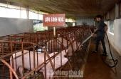 Huyện Phúc Thọ: Phát triển mô hình chuỗi sản xuất và cung cấp thịt lợn sinh học