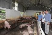 Triển khai hiệu quả công tác chăn nuôi và thú y