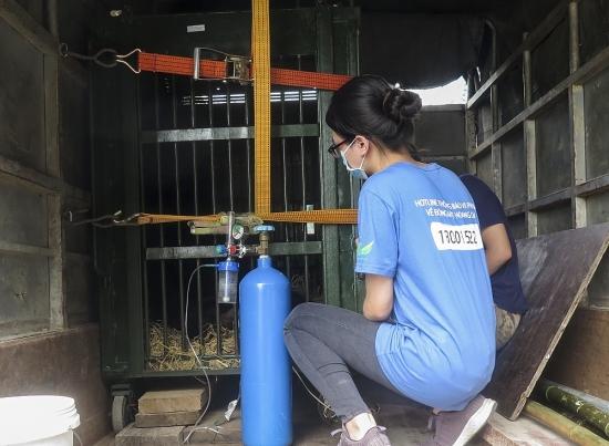 Chuyển giao một cá thể gấu nuôi nhốt hơn 15 năm đến trung tâm cứu hộ