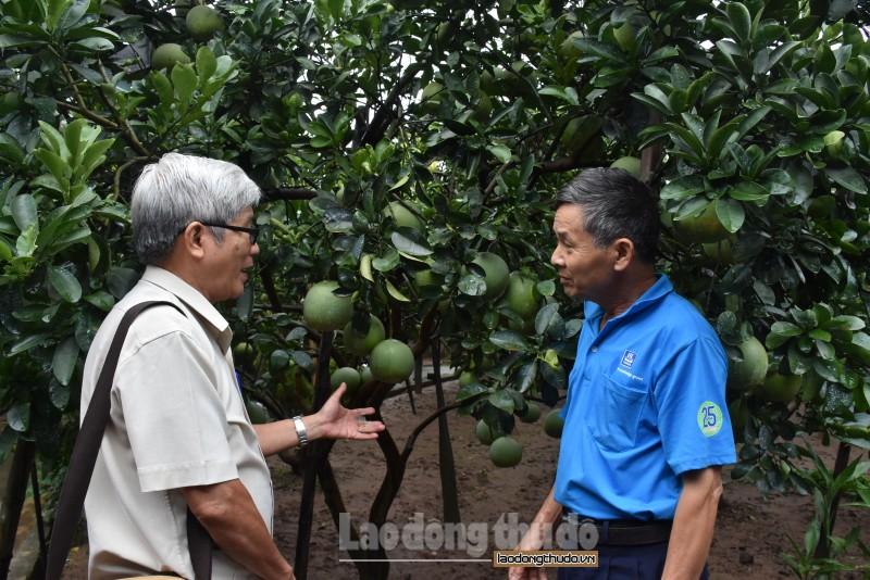 Tập trung phát triển các loại cây ăn quả chất lượng cao
