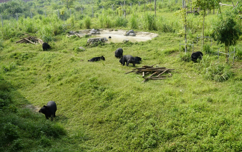 Nỗ lực bảo tồn các loài hoang dã và đa dạng sinh học