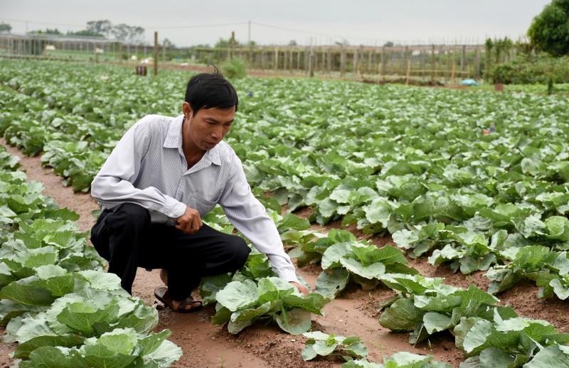 Ngành Nông nghiệp Thủ đô hướng đến mô hình sản xuất tiên tiến
