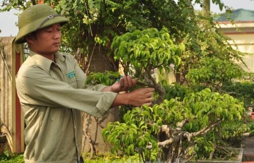 Bén duyên với nghề chăm sóc cây xanh
