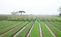 Thúc đẩy hoạt động hỗ trợ sản xuất, kết nối tiêu thụ nông sản an toàn