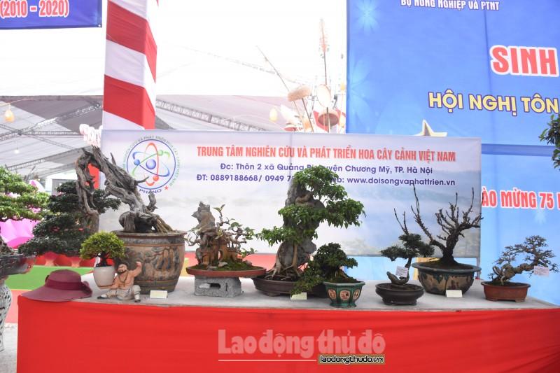 chiem nguong dan cay canh doc la tai lien hoan sinh vat canh thu do 2019