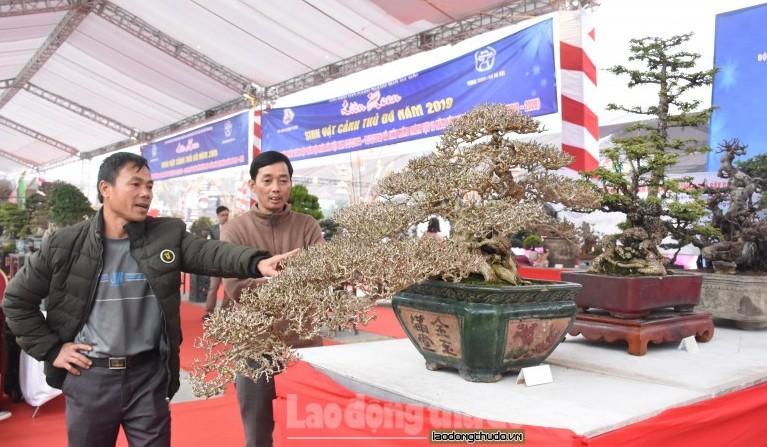 Chiêm ngưỡng dàn cây cảnh độc, lạ tại Liên hoan sinh vật cảnh Thủ đô 2019