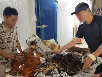 Bắt quả tang vụ buôn bán rùa biển lớn nhất năm 2020