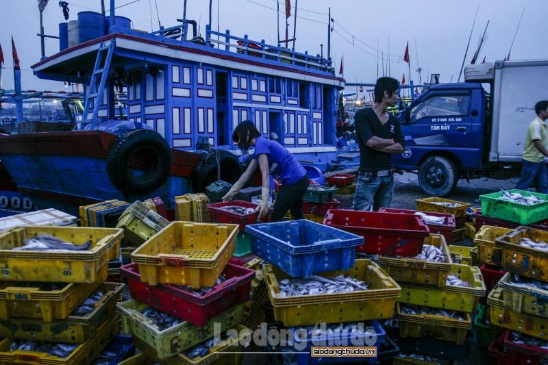 Nhộn nhịp cá về trên bến Hải Bình