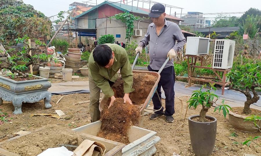 Người trồng đào thất thốn tất bật vào vụ mới