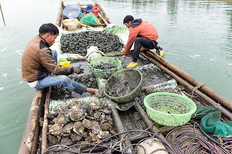 Sau Tết, những người ngụp lặn đáy sông kiếm tiền triệu mỗi ngày