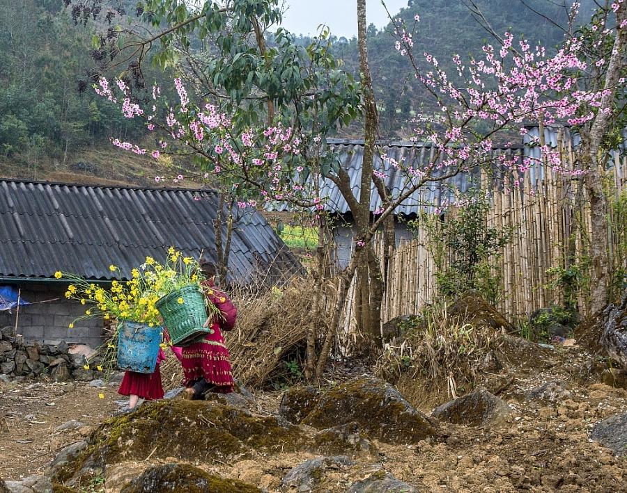 Hà Giang trữ tình trong sắc hoa nở muộn
