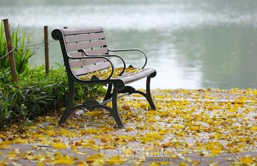 Hồ Gươm phủ sắc vàng mùa sấu thay lá
