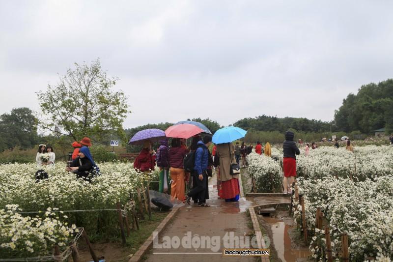 Mặc trời mưa rét, vườn cúc họa mi vẫn nườm nượp khách tham quan