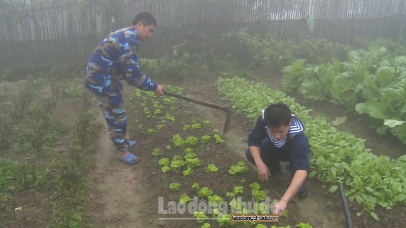 Kỳ cuối: Những trang trại thu nhỏ nơi đảo xa