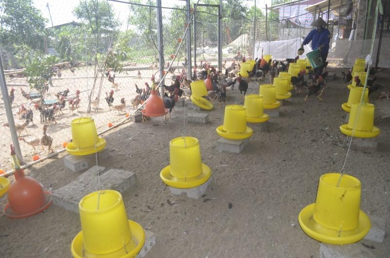 Bệnh viện Bạch Mai: Phát hiện 2 ca viêm phổi nặng do nghi nhiễm cúm gia cầm