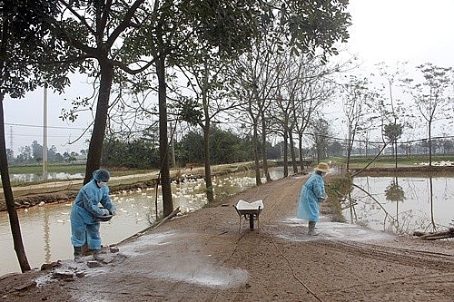 Ngăn chặn triệt để nguy cơ lây lan dịch cúm gia cầm