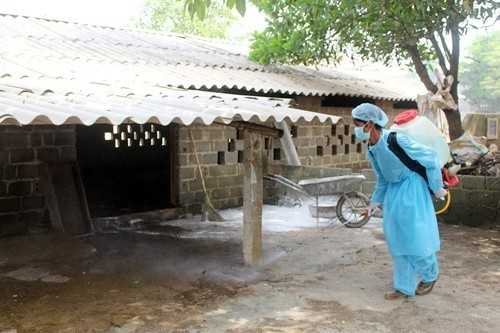 Chương Mỹ:Khử trùng môi trường phòng chống bệnh dịch tả lợn Châu Phi