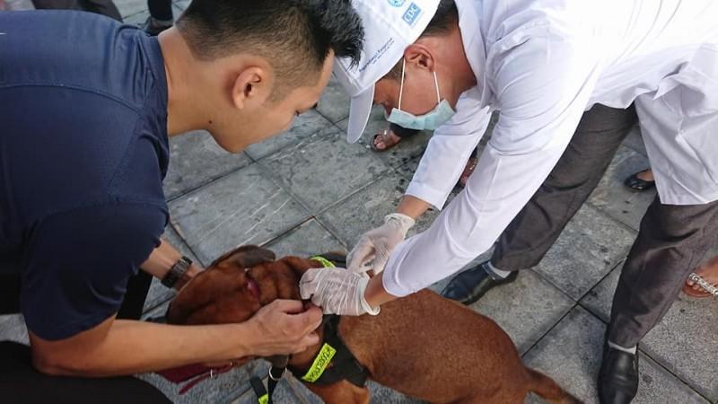 Bộ Y tế: Yêu cầu đảm bảo cung ứng vắc xin dại trong mùa hè