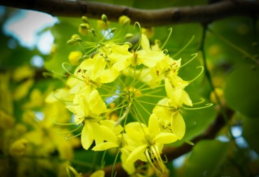 Tháng 6 Hà Nội trăm hoa khoe sắc rực rỡ