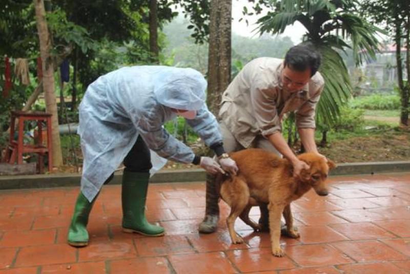 Một bệnh nhi tử vong nghi do nhiễm virus dại từ vật nuôi trong nhà