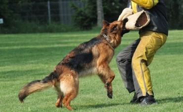 Thêm một nạn nhân bị chó béc giê nhà nuôi cắn tử vong