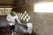 Tổng vệ sinh phòng dịch bệnh cho gia súc, gia cầm sau ngập úng
