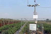 Chương Mỹ: Ứng dụng công nghệ cao trong phát triển nông nghiệp