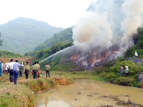 Tăng cường bảo vệ rừng và phòng cháy, chữa cháy rừng