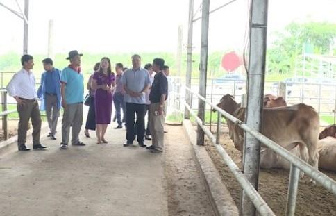 Huyện Phú Xuyên nâng cao chất lượng đời sống văn hóa nhân dân