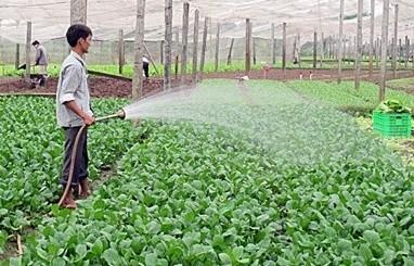 Chương Mỹ: Tích cực chuyển đổi mô hình sản xuất rau Vietgap