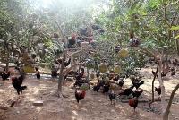 Hiệu quả từ các mô hình kinh tế trang trại ở Lam Điền