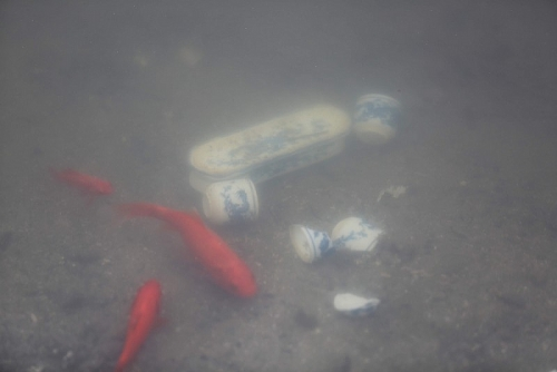 Cá chép phơi trắng bụng trên hồ Hoàng Cầu