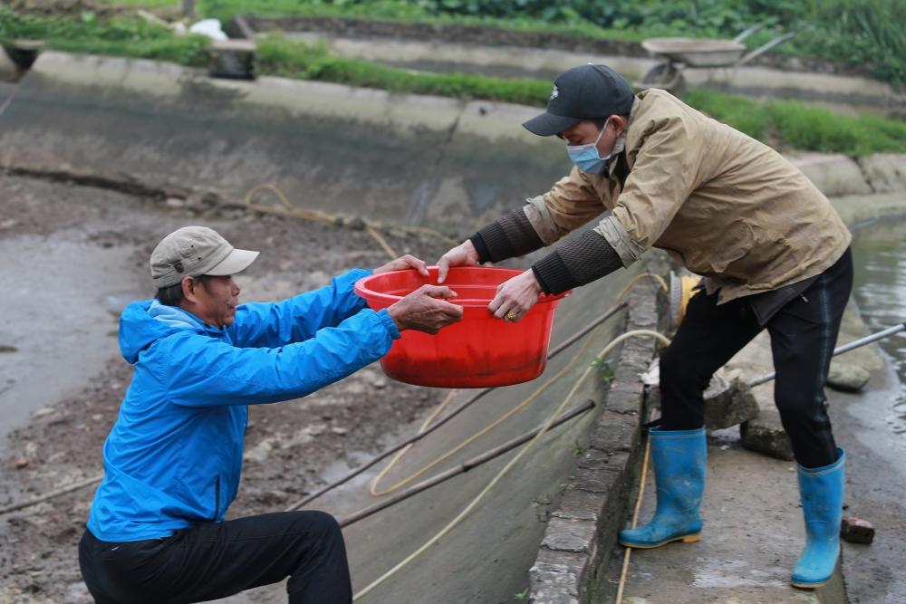 Làng nuôi cá chép đỏ tất bật phục vụ Tết ông Công, ông Táo