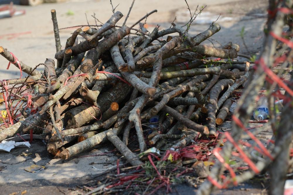 Đào rừng dán tem