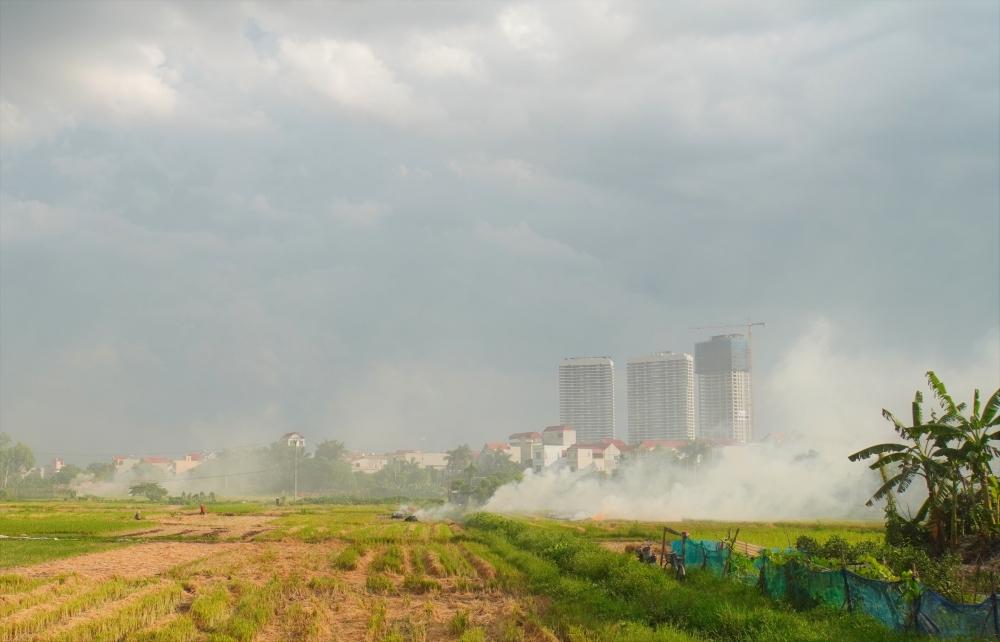 Tái diễn tình trạng đốt rơm rạ trên các cánh đồng, gây ô nhiễm không khí
