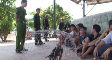 Triệt phá sới đá gà ăn tiền lớn nhất Quảng Bình